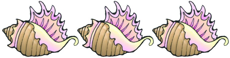 seashell copy copy